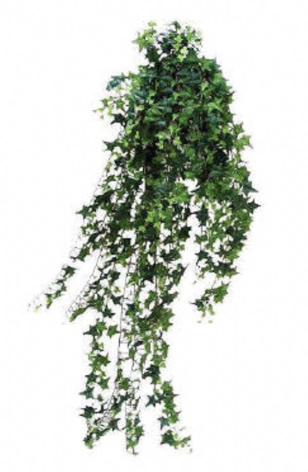 efeu planter